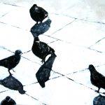 piccioni 1 - Copie